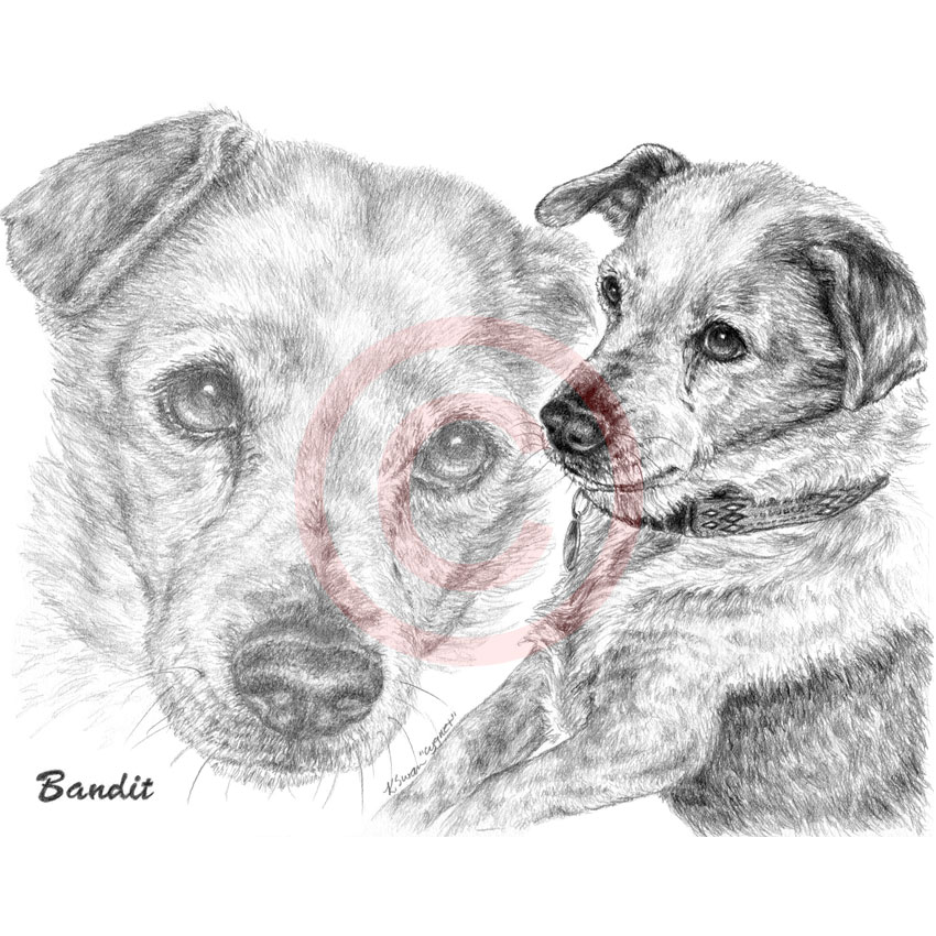 Pet memorial - Jack Russell dog pencil portrait by Kelli Swan