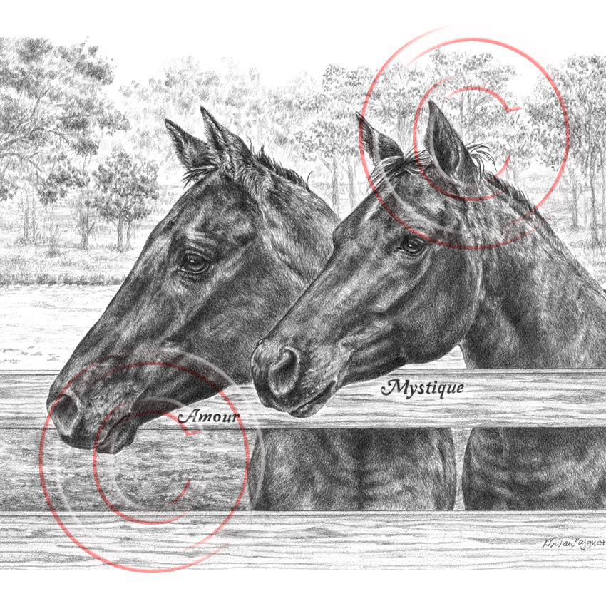 Two Pasture horses - custom pencil portrait by Kelli sWan