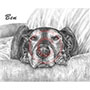 Big Ben the Dog Pet Portrait