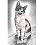 Custom Cat Portrait in Pencil