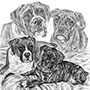 Boxer Dogs Puppies - Custom Pencil Portrait