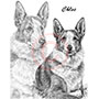 Collie Dog Pet Portrait Drawing in Pencil