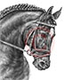 Friesian Horse Portrait