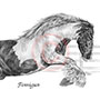 Gypsey Vanner Horse Portrait Drawing