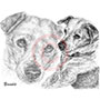 Pencil Portrait Drawing of Jack Russell Terrier Dog