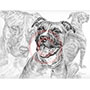 Pencil Portrait Drawing of Pit Bull Dogs