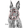 Turbo the Greyound Dog Pencil Pet Portrait