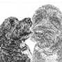 Terrier Dog Portrait Drawing - Custom Pencil Portrait