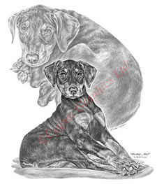 Doberman Pinscher puppy pencil drawing by Kelli Swan