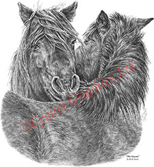Chincoteague pony pencil drawing by Kelli Swan