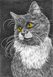 """Whiskers"" cat drawing by Kelli Swan"