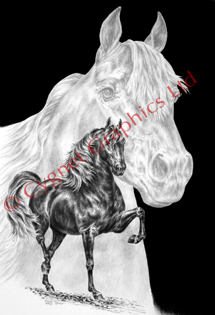 """Body Mind and Spirit"" Morgan horse drawing by Kelli Swan"