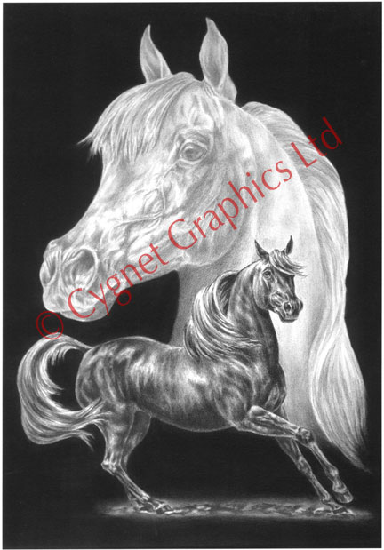 """Arabian"" horse drawing by Kelli Swan"