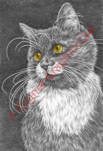 Cat with whiskers drawing by Kelli Swan