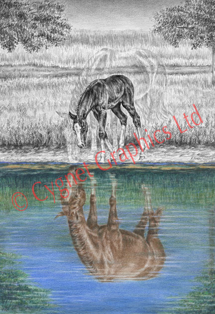 Mare foal water reflection - pencil drawing by Kelli Swan