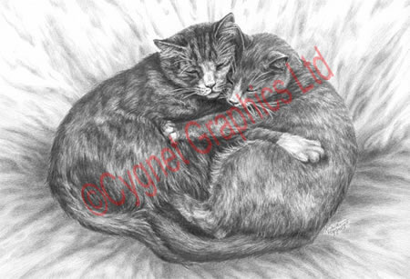 Two cats cuddling - pencil drawing by Kelli Swan