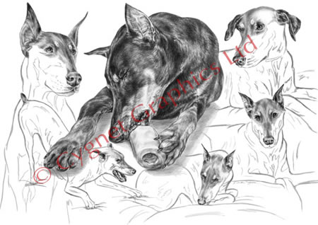 """Dober-Thoughts"" doberman pinscher dog pencil drawing by Kelli Swan"