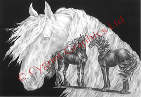 Friesian horse montage - pencil drawing by Kelli Swan