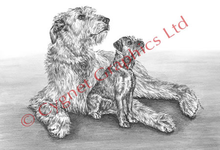 """Full of Promise"" Irish Wolfhound dog drawing by Kelli Swan"