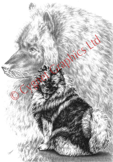 black and white keeshond dogs - pencil drawing by Kelli Swan