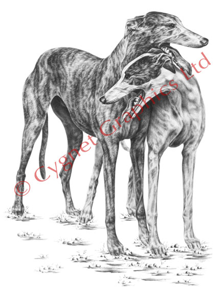 Two greyhound dogs hugging leaning - pencil drawing by Kelli Swan