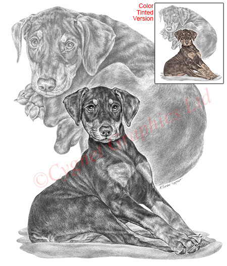 Doberman puppy - pencil drawing by Kelli Swan