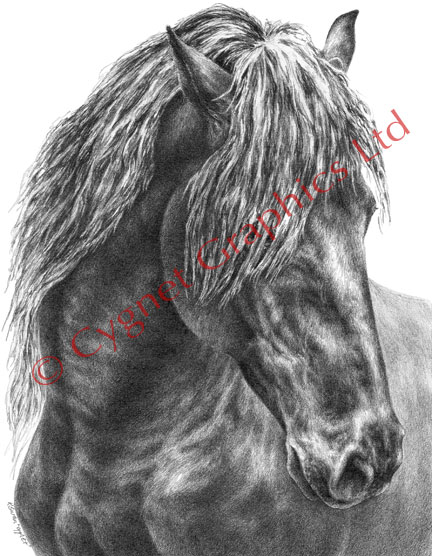 """Mystique"" horse drawing by Kelli Swan"