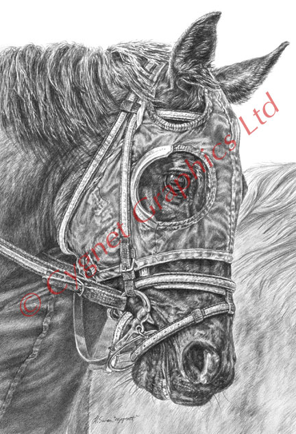 """Ready Set GO"" Thoroughbred horse drawing by Kelli Swan"