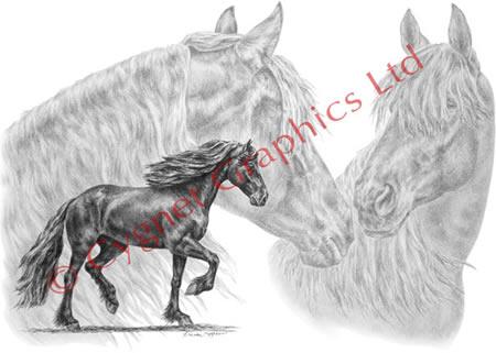 Friesian Horse Head Horse Head Drawing Was