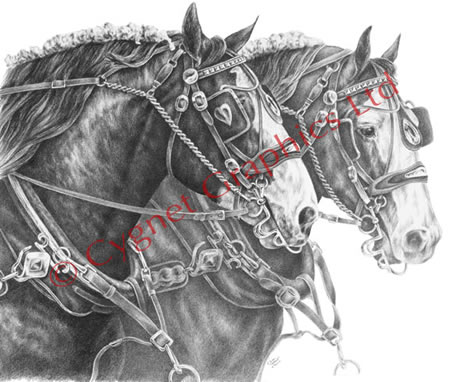 Two clydesdale horse team - pencil drawing by Kelli Swan