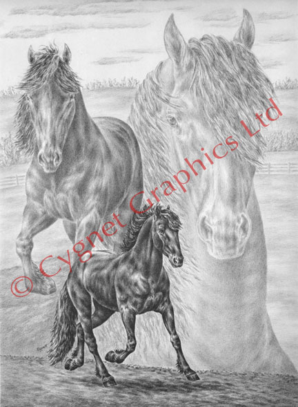 """The Friesian Horse"" horse drawing by Kelli Swan"