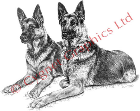 Two german shepherds lying together - pencil drawing by Kelli Swan