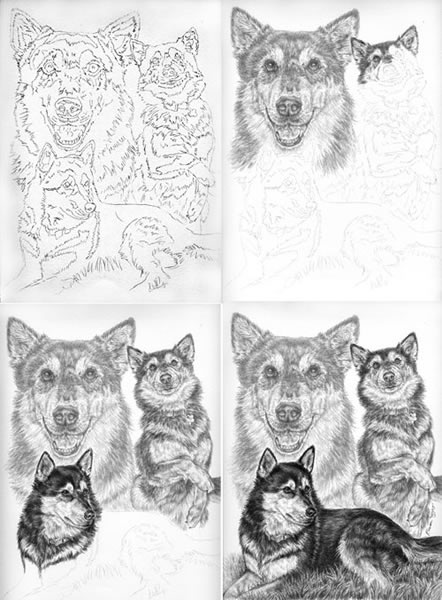 Stages of a pencil portrait by kelli swan