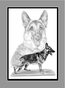 "Limited Edition Dog Print ""German Shepherds"" in Black & White, by Kelli Swan"