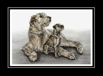 "Limited Edition Irish Wolfhound Dog Print ""Full of Promise"" hand-tinted with color, by Kelli Swan"
