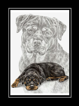 "Limited Edition Rottweiler Dog Print ""Rottie Charm"" hand-tinted with color, by Kelli Swan"