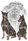 """A Doberman Knows"" Pinscher dog drawing by Kelli Swan"