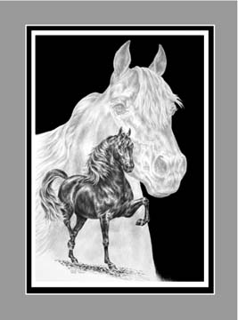 "Limited Edition Morgan Horse Print ""Body, Mind & Spirit"" in Black & White, by Kelli Swan"
