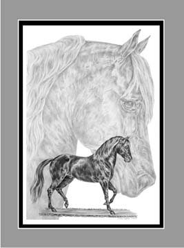 "Limited Edition Paso Fino Horse Print ""Fine Steps"" in Black & White, by Kelli Swan"