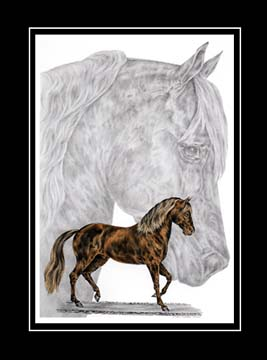 "Limited Edition Paso Fino Horse Print ""Fine Steps"" hand-tinted with color, by Kelli Swan"