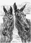 """Trail Mates"" - Mule horses pencil drawing"